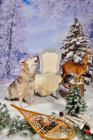 phototheatre-christmas wolf-01-M